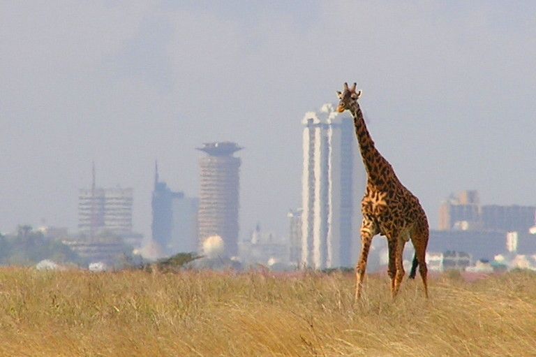 View from Nairobi National Park